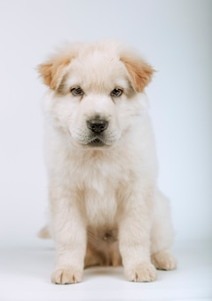 Portrait of white mongrel puppy