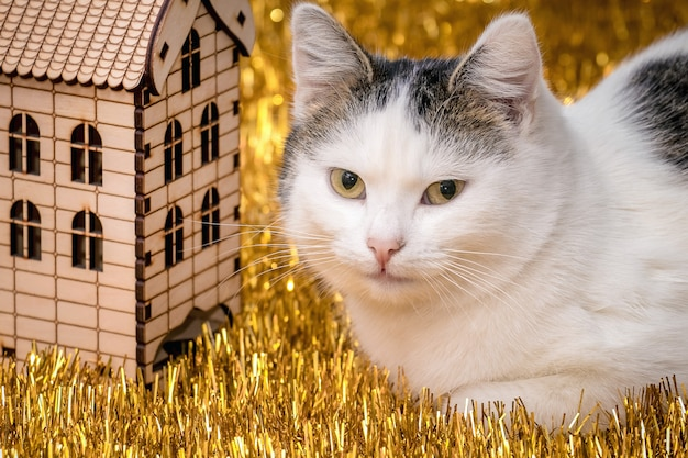 Portrait of white spotted cat near wooden toy house