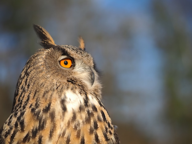 Portrait of a wild owl on a forest