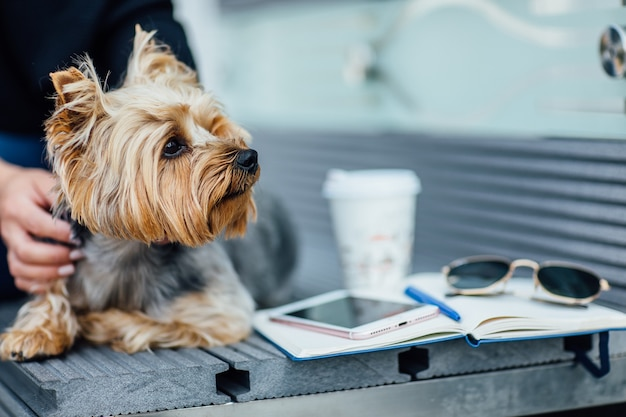 Portrait of yorkshire terrier dog siting on the bench, fashion concept. with his woman.