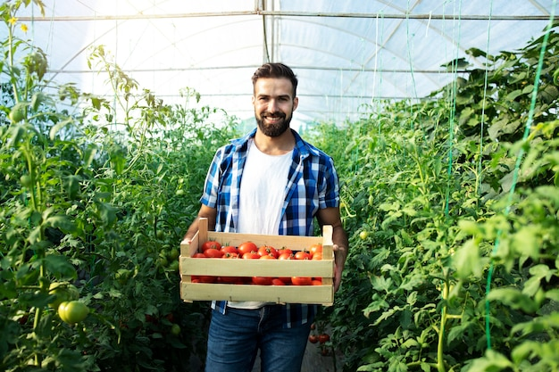 Portrait of young bearded farmer holding crate full of fresh tomatoes in hothouse.