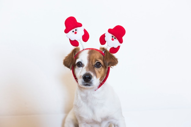 Portrait of a young cute dog wearing a santa diadem. christmas concept
