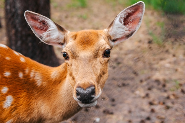 Portrait of a young deer in the forest