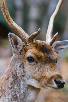 Portrait of young deer stag