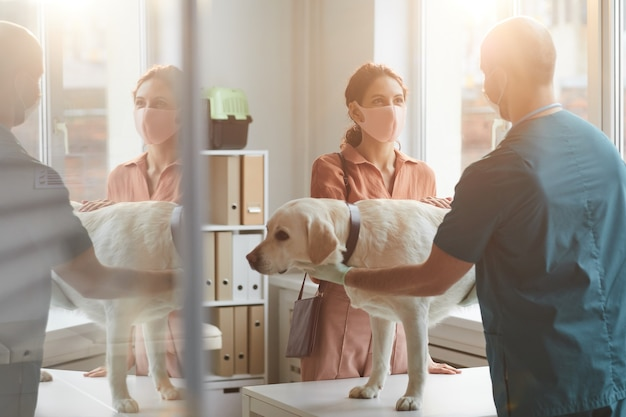 Portrait of young woman wearing mask while talking to veterinarian examining dog at vet clinic, scene lit by sunlight, copy space