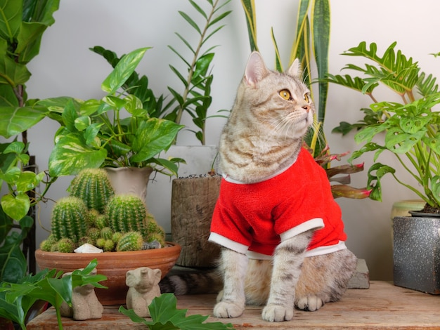 Portraits ginger cat wearing red shirt sit on wood table with air purify  house plants