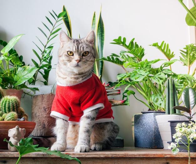 빨간 티셔츠를 입은 생강 고양이 나무 테이블에 앉아 공기 정화 집 식물 monsteraphilodendron selloum zamioculcas zamifoliasnake plantspotted betle ficus lyratarubber plant 초상화