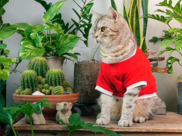 빨간 티셔츠를 입은 생강 고양이 공기 정화 집 식물이 있는 나무 테이블에 앉아 있는 초상화
