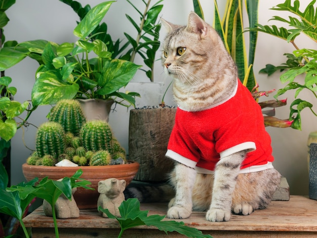 Portraits ginger cat wearing red tshirt sit on wood table with air purify house plants monsteraphilodendron selloum zamioculcas zamifoliasnake plantspotted betle ficus lyratarubber plantcactus