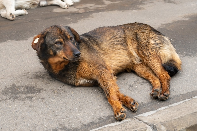 Portraits of a homeless dog on city pathway floor