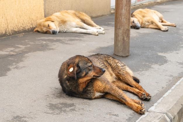 街の小道の床にホームレスの犬の肖像画