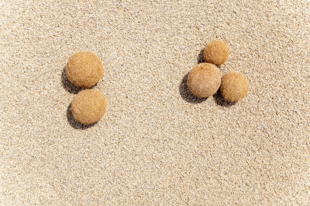 Posidonia oceanica fruits on a mediterranean beach