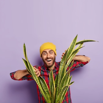수염을 가진 긍정적 인 유럽 남자, sansevieria 또는 snakeplant를 통해 보이는, 노란색 모자와 체크 무늬 셔츠를 입고 자주색 배경에 포즈.