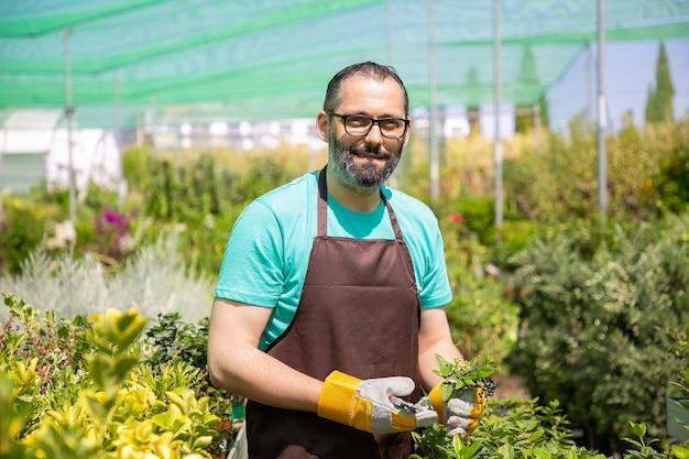 Позитивный флорист-мужчина стоит среди рядов с горшечными растениями в теплице, срезая куст, держит ростки,