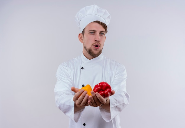 Un uomo giovane chef barbuto positivo che indossa l'uniforme bianca del fornello e il cappello che guarda l'obbiettivo mentre si tiene i peperoni gialli e rossi sulla sua mano su un muro bianco