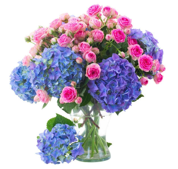 Posy of fresh pink roses and blue hortenzia flowers close up  in glass vase isolated on white space