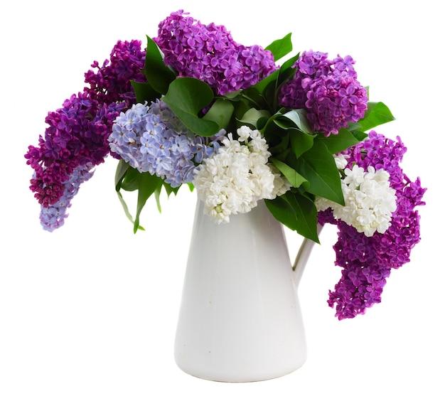 白い背景で隔離の鍋に新鮮なライラックの花の花束