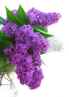 花瓶の新鮮なライラックの花の花束は、白い背景で隔離のクローズアップ