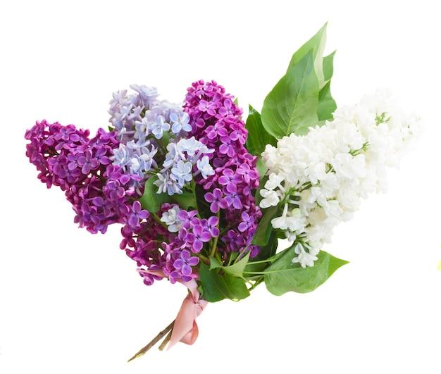 白い背景で隔離の緑の葉と新鮮なライラックの花の花束