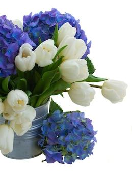 白いチューリップと青いアジサイの花の花束が白いスペースに孤立してクローズアップ