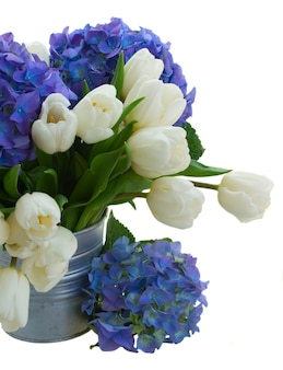 Posy  of white tulips  and blue hortensia flowers close up  isolated on white space