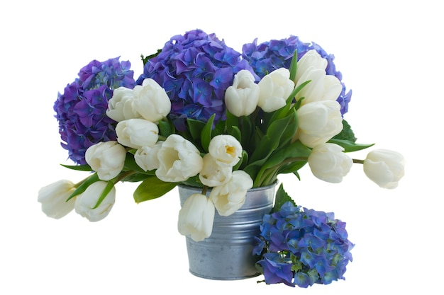 Posy  of white tulips  and blue hortensia flowers   isolated on white space
