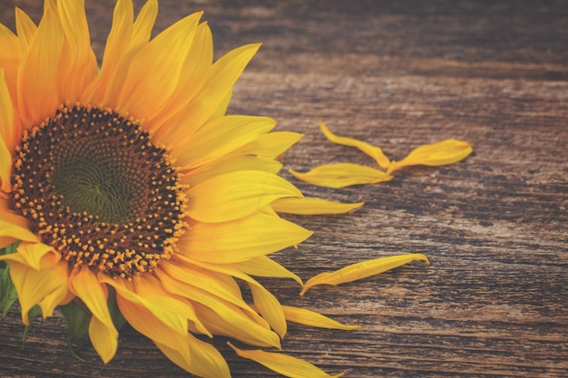 Posy of yellow sunflower on aged wooden background, retro toned