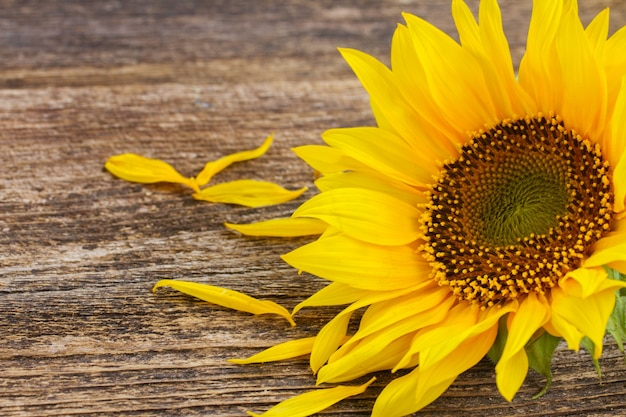 Posy of yellow sunflower on aged wooden background
