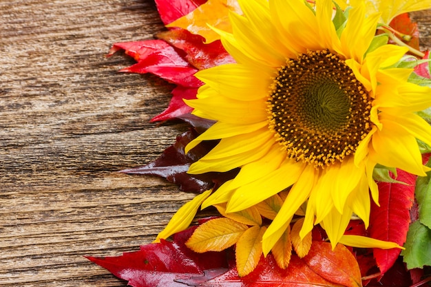 Posy of yellow sunflower and fall leaves