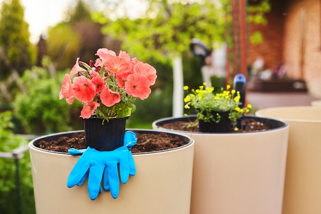 A pot of beautiful bright flowers, gloves lying in a large ceramic vase in the garden