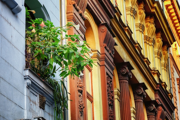 Pot flowers on windowsill and traditional architecture facade exterior, budapest