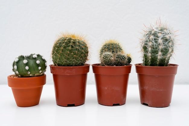 테이블에 정렬 된 식물의 냄비 무료 사진