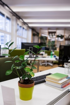 Pot plant with stack of books on desk