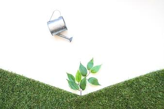 Pot watering small tree