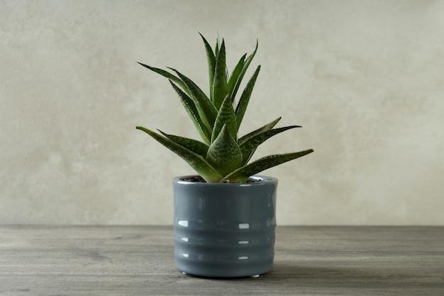 Pot with aloe vera plant on gray textured table