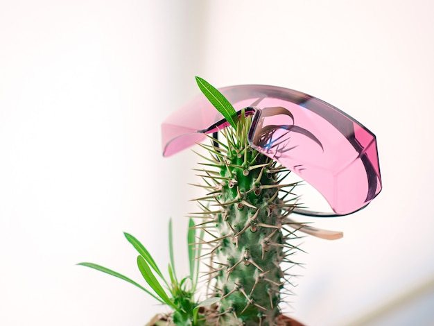 Pot with cactus with pink protect laser epilation glasses hair removal laser epilation fun