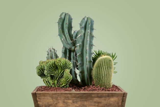 Pot with green cacti in a decorative indoor pot with a matte pastel green background