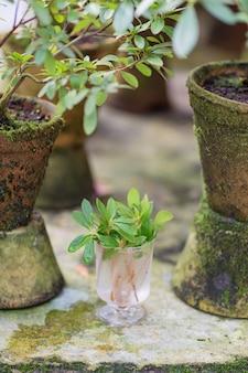 Горшок с землей, ростки зеленых растений, цветов и садовый инвентарь на бетоне.