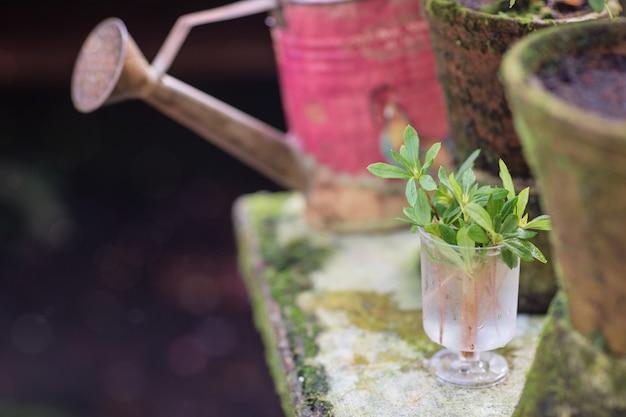 地面、緑の植物の花の芽とコンクリート上の園芸工具のポット。