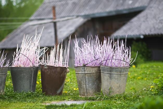 植える前のジャガイモ。家庭菜園に植えるために準備された農場の庭の金属製のバケツに入れられたジャガイモの苗。