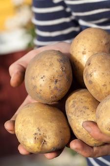 손에 감자-여자, 근접 촬영, 필드의 작은 깊이의 손에 누워 감자를 파고