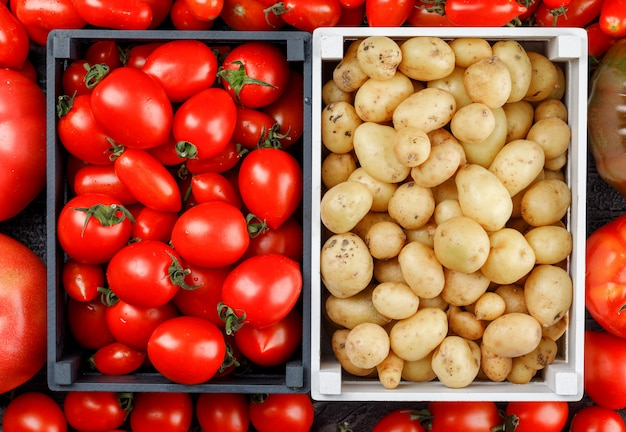 Potatoes and tomatoes in wooden boxes on tomato wall, flat lay.