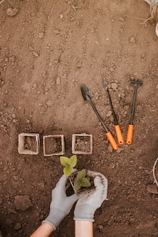 Pots and gardening tools
