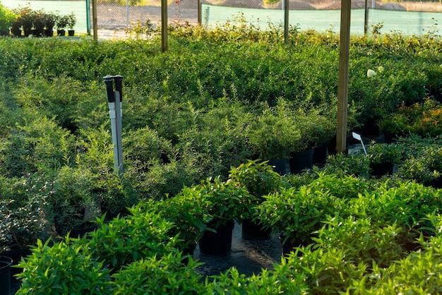 정원 센터와 온실에 녹색 식물이있는 화분