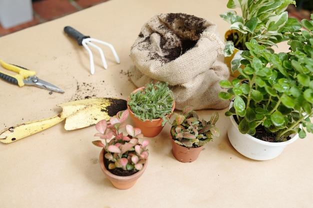 화분, 비옥한 흙 자루, 흙손, 가지치기, 정원용 포크가 테이블에 있는 화분