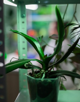 Pots with plants in biology experiment laboratory scientific research place