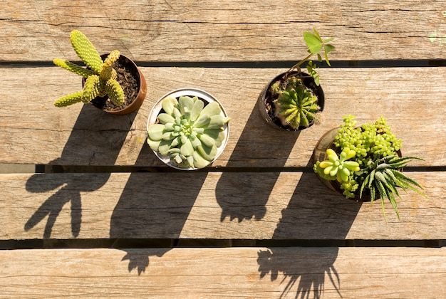 Pots with plants on wooden background