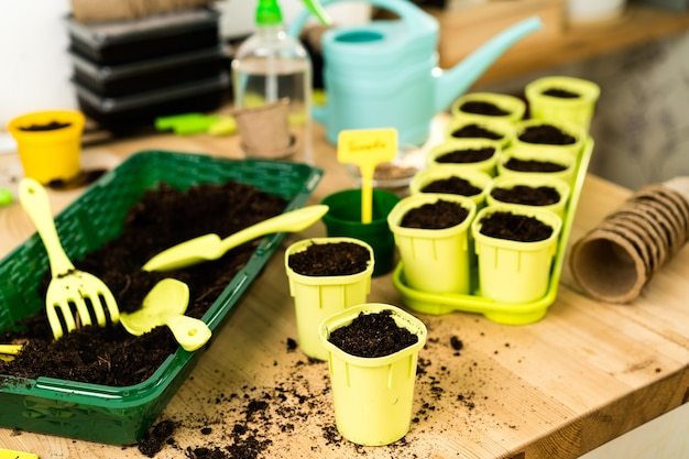 야채, 마이크로 채소, arugula, 원예 개념 및 식물 심기의 씨앗과 묘목을 심기위한 나무 테이블에 흙이있는 화분.