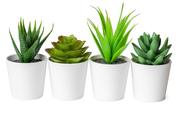 Pots with succulent plants isolated on white