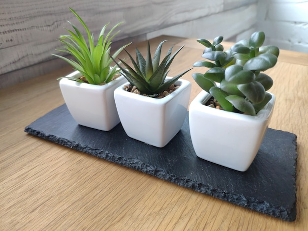 Pots with succulents on light wooden table against